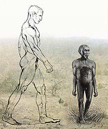 Ученые доказали, что странные кости карликовых человечков, найденные в Индонезии, не принадлежат нашим предкам